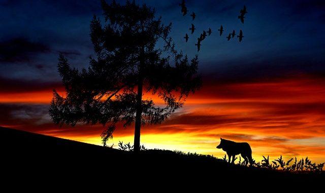werewolf spells that work, Shape shift spells, Vampire spells, reality about werewolf, want to change into werewolf, wolf spells in USA, UK